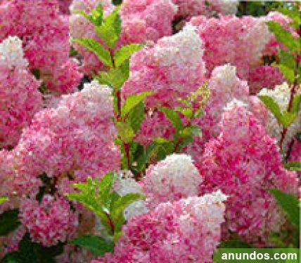 Empresa de jardineria mantenimientos de comunidades marbella - Empresas de jardineria en malaga ...