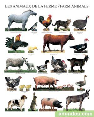 Animal farm establishing common enemies