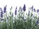 Curso de aromaterapia sistémica en vipassana