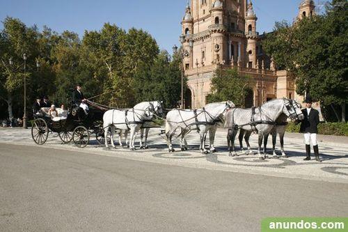 Alquiler de coches de caballos para bodas y eventos en for Espectaculos en sevilla