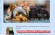 Amigos del yorkshire terrier