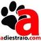 Adiestramiento de perros en madrid
