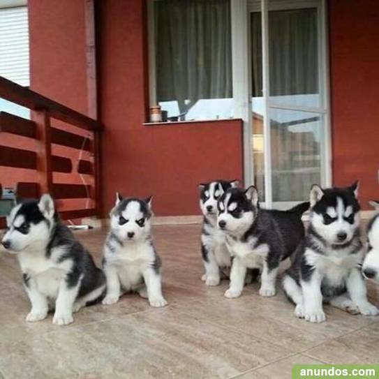 regalo cachorros valencia gratis