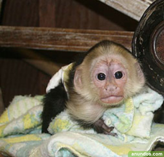 Comprar primates y otros animales exóticos