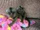 Hermosos monos tití para su adopción gratuita
